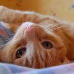 gato (640x472)