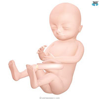semana-15-bebe