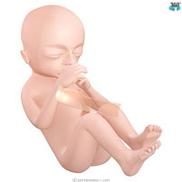 semana-16-bebe