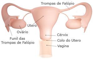 orgao-reprodutor-mulher