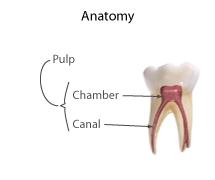 Polpa dentária = Pulp