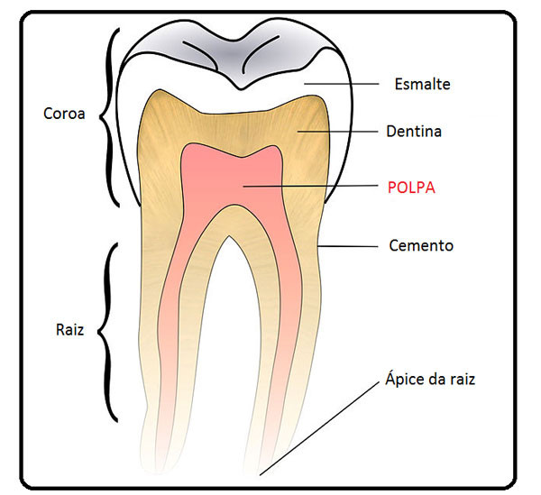 interior-do-dente