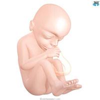 semana-19-bebe