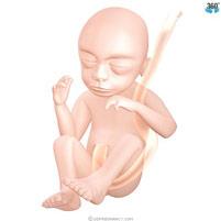 semana-21-bebe