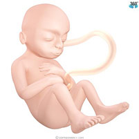semana-25-bebe