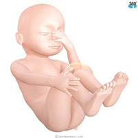 semana-27-bebe